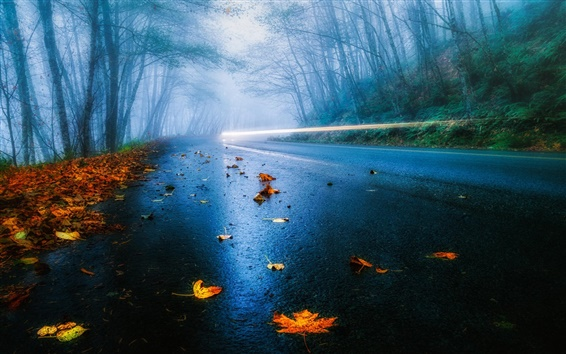 Wallpaper USA road, autumn, rain, fog, foliage, forest, trees, light