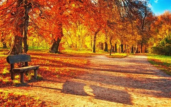 Обои Осенний парк, красные листья, дерево скамьи, солнечный свет