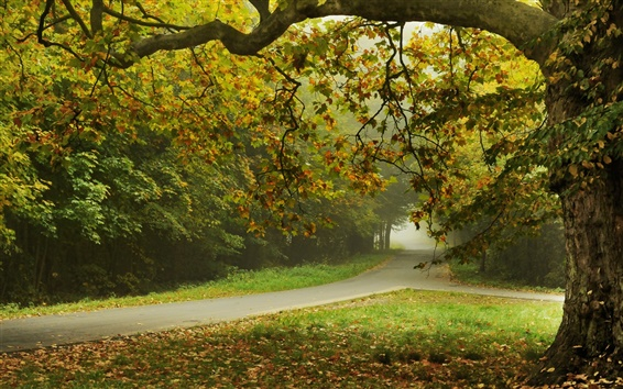 Wallpaper Autumn, trees, park, road, leaves