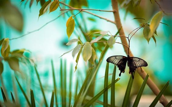 Wallpaper Black butterfly, branch, grass, leaves