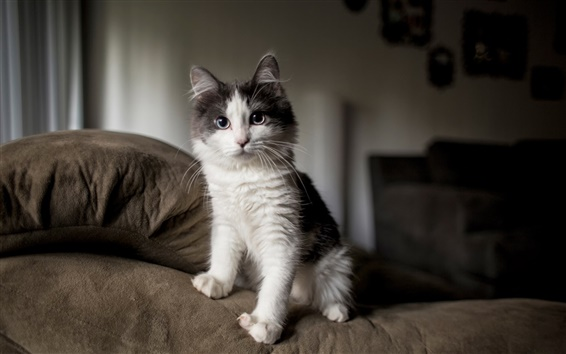 Wallpaper Black white cat in the room