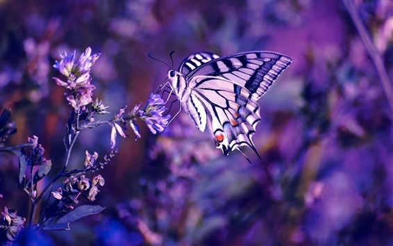 Wallpaper Butterfly, flowers, insect, plant, purple background