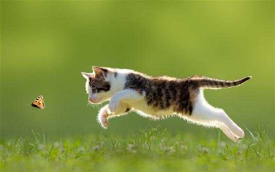 Papéis de Parede Cat, borboleta, salto, grama