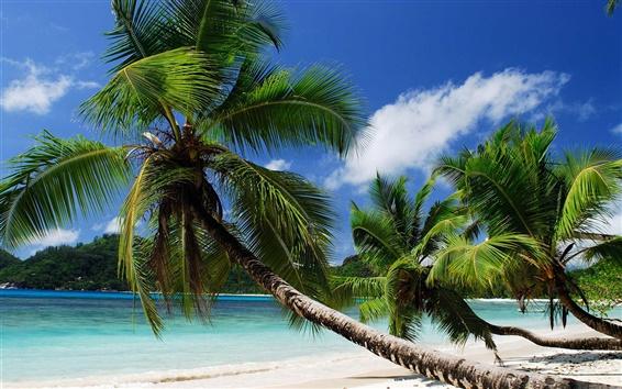 壁紙 海岸、海、砂、ビーチ、ヤシの木