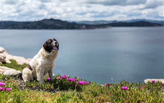 Wallpaper Cute dog, river, flowers