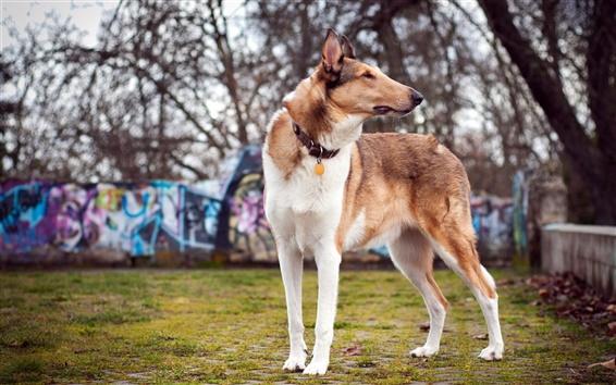Wallpaper Dog, summer, bokeh