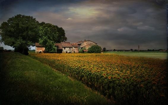 Wallpaper Dusk, cloudy sky, sunflowers, home