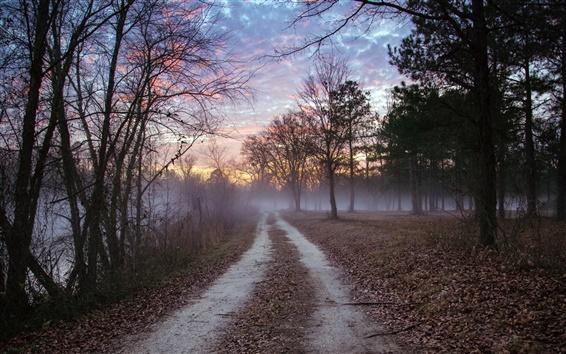 배경 화면 숲, 도로, 황혼