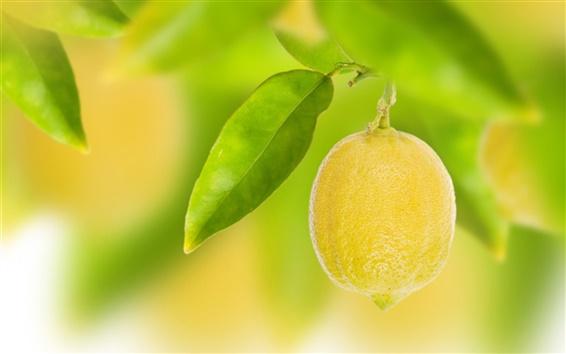 Fond d'écran Fruit, jaune citron, feuilles, bokeh