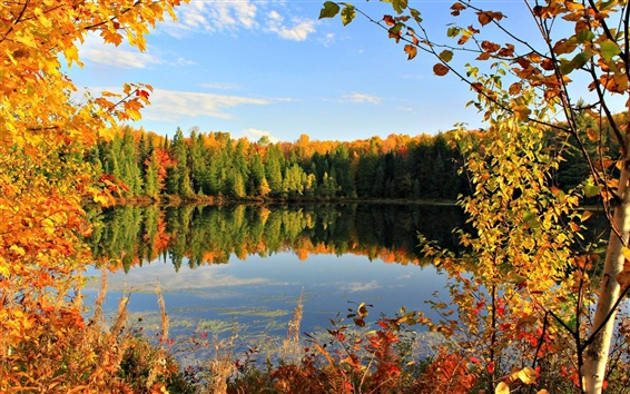 Wallpaper Golden autumn, fall, leaves, sky, pond, lake, clouds, trees