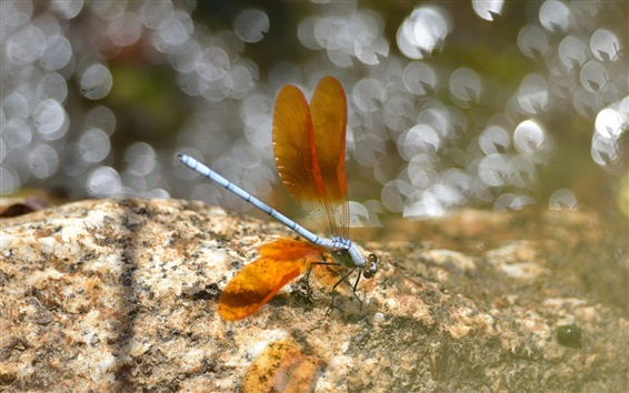 Wallpaper Insect, dragonfly, wings, orange, glare, stones