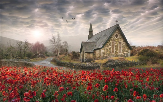 Wallpaper Ireland, poppies, church, road, birds, clouds