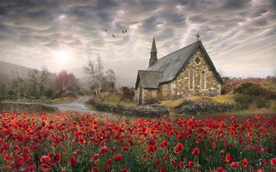 壁紙 アイルランド、ケシ、教会、道路、鳥、雲