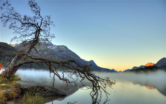 Обои Озеро, туман, дерево, горы