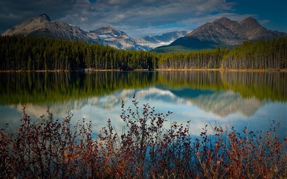 Fond d'écran Lac, étang, l'eau, les montagnes, les forêts, les arbres