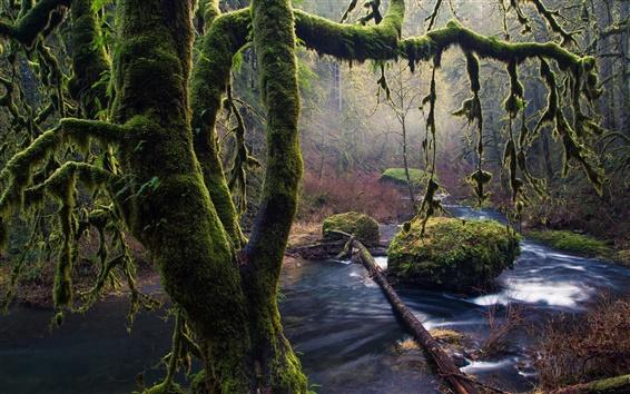 Wallpaper Moss, trees, stones, stream, Oregon
