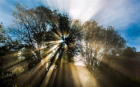 Wallpaper Nature, spring, tree, sun rays