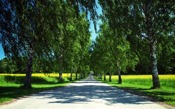 Papéis de Parede Noruega natureza verão, estrada, campos de canola, bétulas, sombras