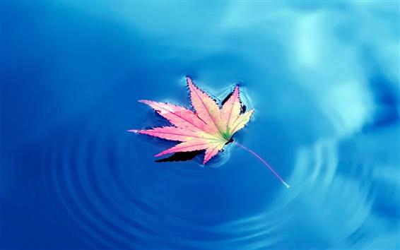 Wallpaper One piece maple leaf, blue lake water