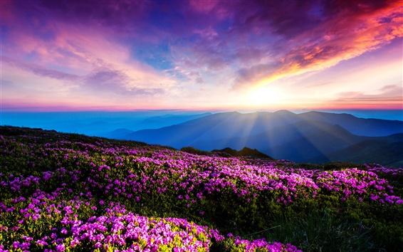 Fond d'écran Fleurs pourpres, ciel, nuages, coucher du soleil, les rayons, les montagnes