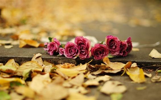 Papéis de Parede Rosa vermelha flores, folhas amarelas, terra, outono