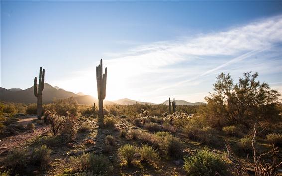 Wallpaper Scottsdale, Arizona, USA, cactus, desert, sky, clouds, sun
