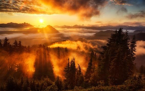 Fond d'écran Ciel, le lever du soleil, les rayons, les montagnes, les nuages, les arbres, brouillard
