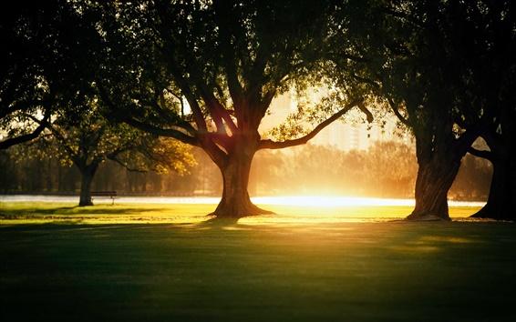 Обои Солнечный свет, деревья, тень, парк, город