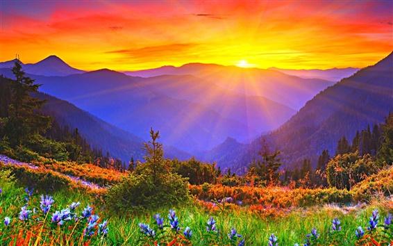 Papéis de Parede Nascer do sol, amanhecer, montanhas, grama, flores