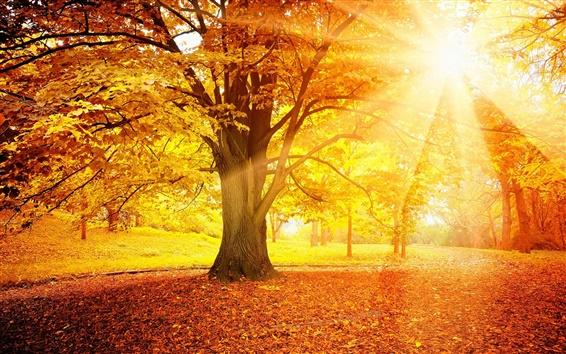 Обои Закат осень, лес, желтые листья, деревья, солнце
