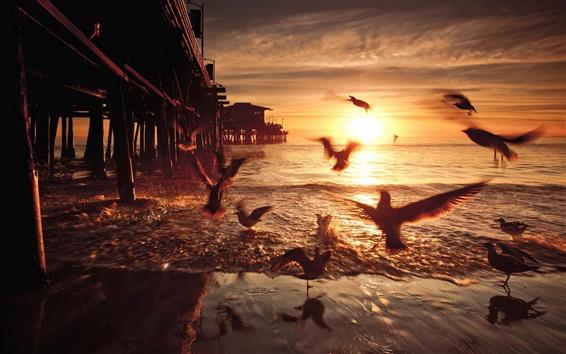 Обои Закат, птицы, мост, США, California