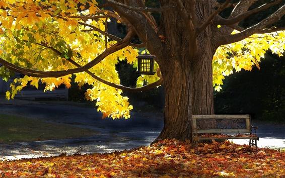 Обои Дерево, скамейка, осень, листья, солнечный свет