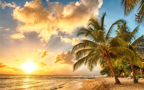 Papéis de Parede Tropical, paraíso, praia, palmeiras, mar, oceano, por do sol