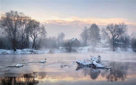 壁紙 冬の朝、木、家、湖、白鳥