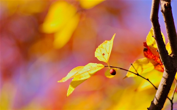Wallpaper Yellow leaves, red berry