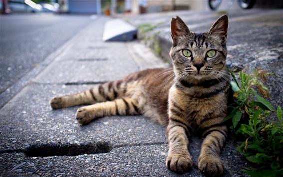 Wallpaper Asphalt road, gray striped cat
