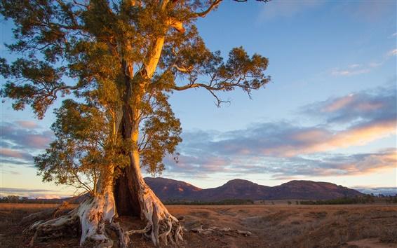 Wallpaper Australia, nature scenery, tree, mountain, evening