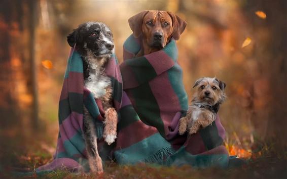 Wallpaper Autumn, dogs, family