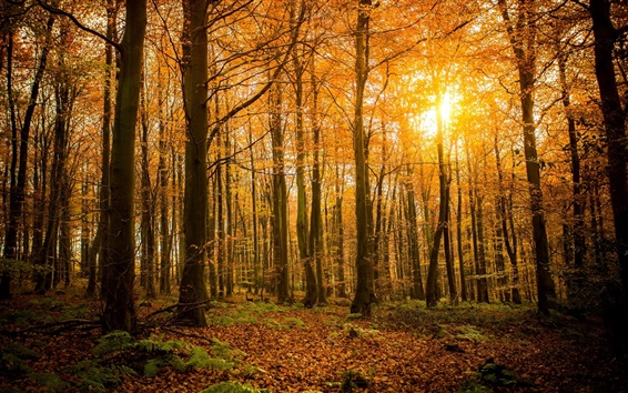 Обои Осень, лес, природа, деревья, ветки, солнечный свет