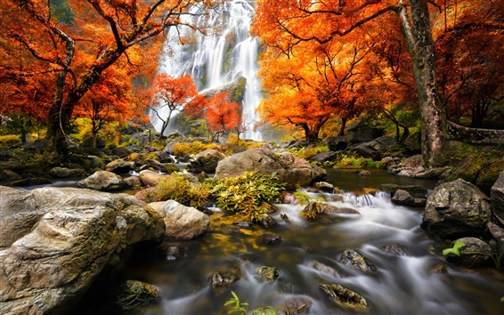 Wallpaper Autumn, forest, waterfalls, trees, red leaves