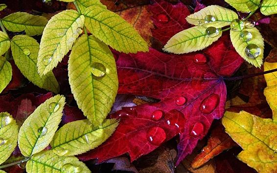 Обои Осень, зеленые желтые листья, капли воды