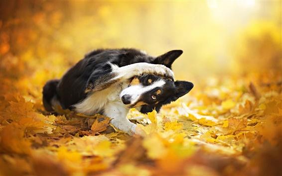 Обои Осень, листья, боке, черная собака