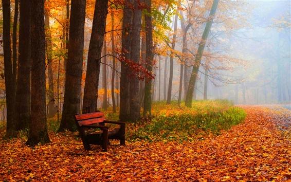 Обои Осень, листья, деревья, парк, трава, дорога, скамейка