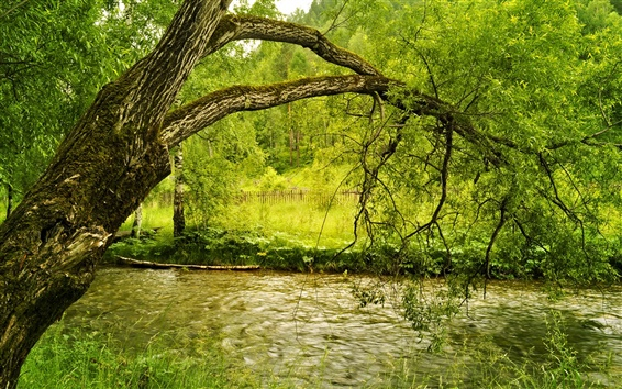 Papéis de Parede Outono, rio, praia, árvores, verde-amarelo folhagem, grama, cerca