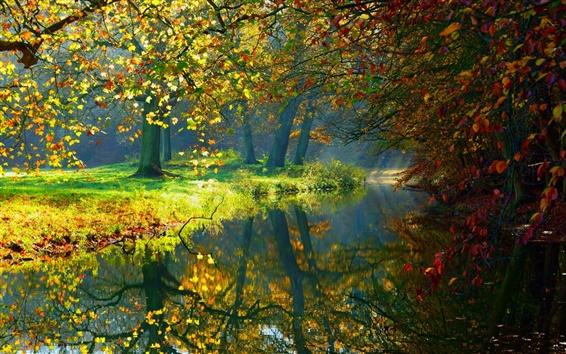 Wallpaper Autumn, river, trees, nature scenery, sunlight