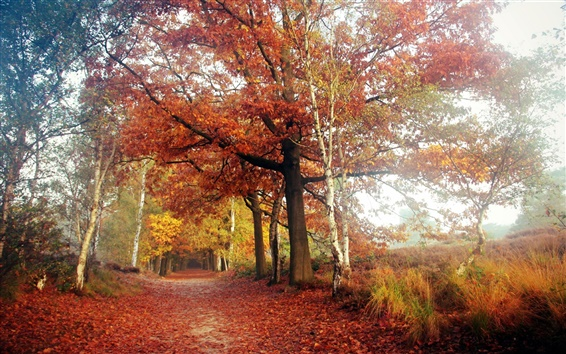 Обои Осень, дорога, деревья, красные листья, блики