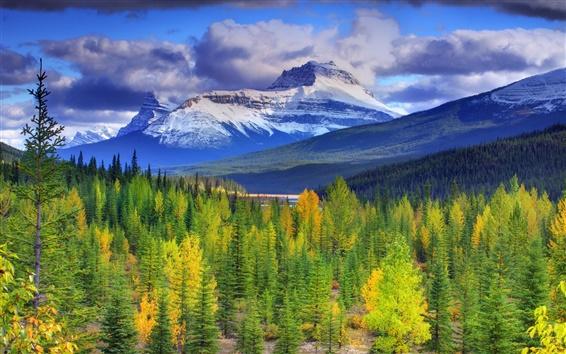 Обои Национальный парк Банф, Альберта, Канада, горы, небо, лес, деревья