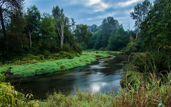 Обои Британская Колумбия, Канада, лес, деревья, река, трава