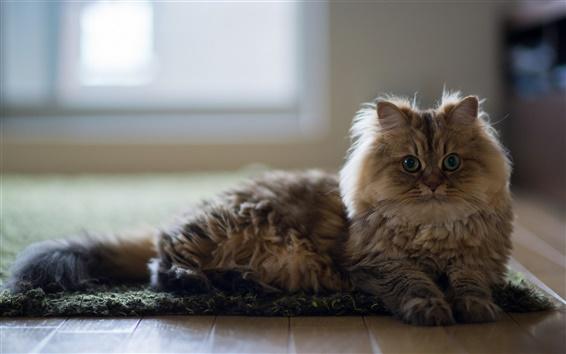 壁紙 猫、家、床