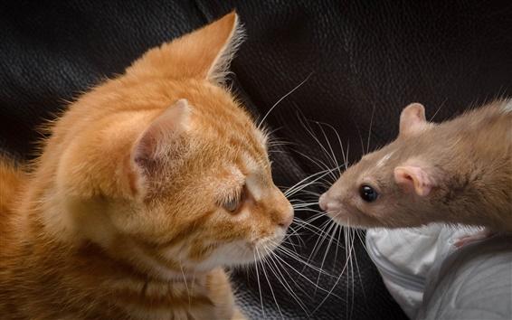 Обои Кошка с мышью, лицом к лицу